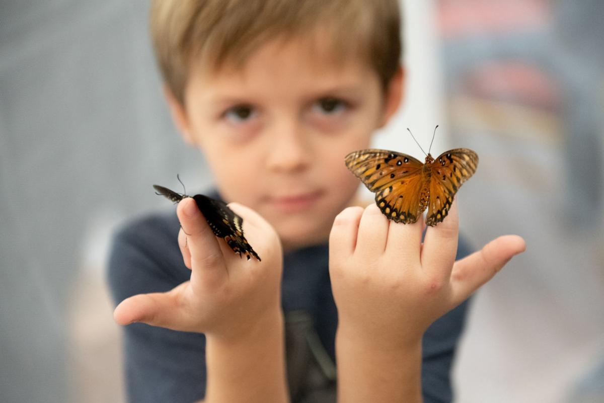 bug ButterflyBoy 100319