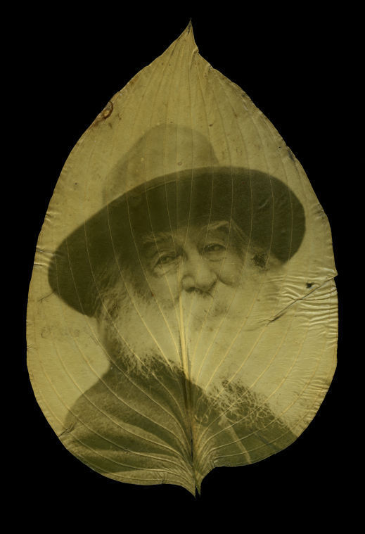 Walt Whitman by Danh and Schultz in Camden house leaf (copy)