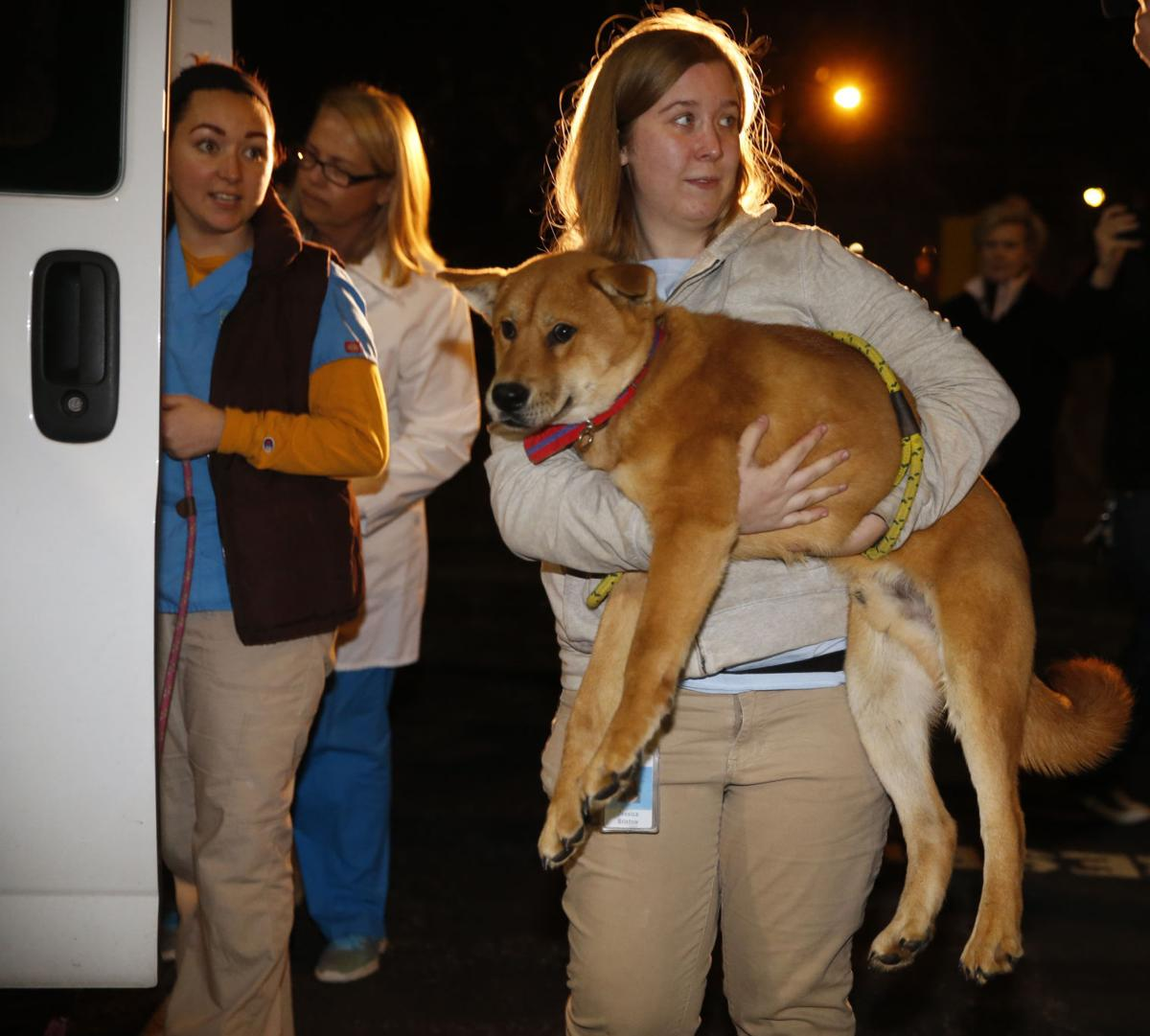 Dogs from South Korean dog meat farm arrive in Richmond for