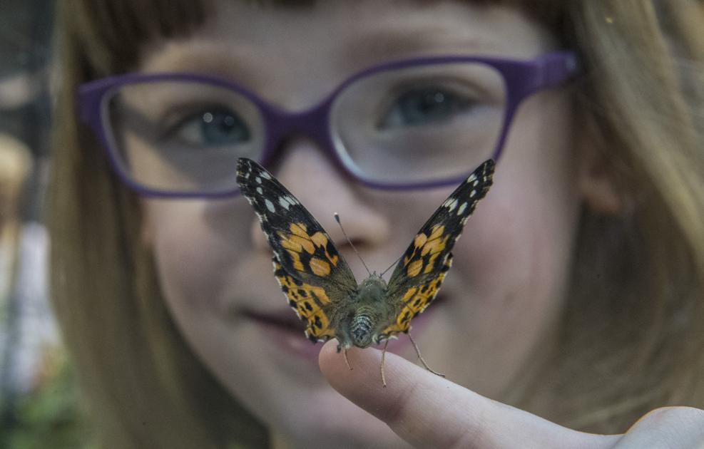 Butterflies take flight in science museum's revamped garden