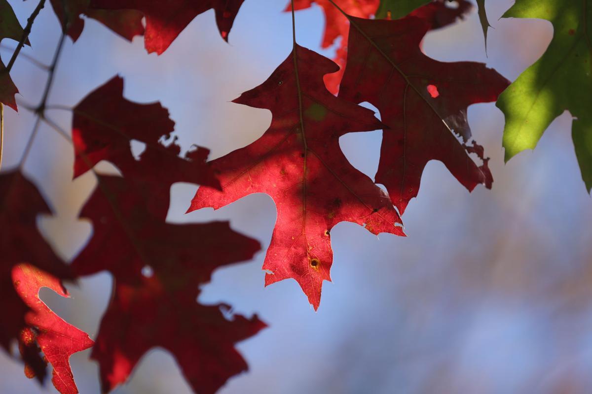 mg fall foliage 102616 (copy)