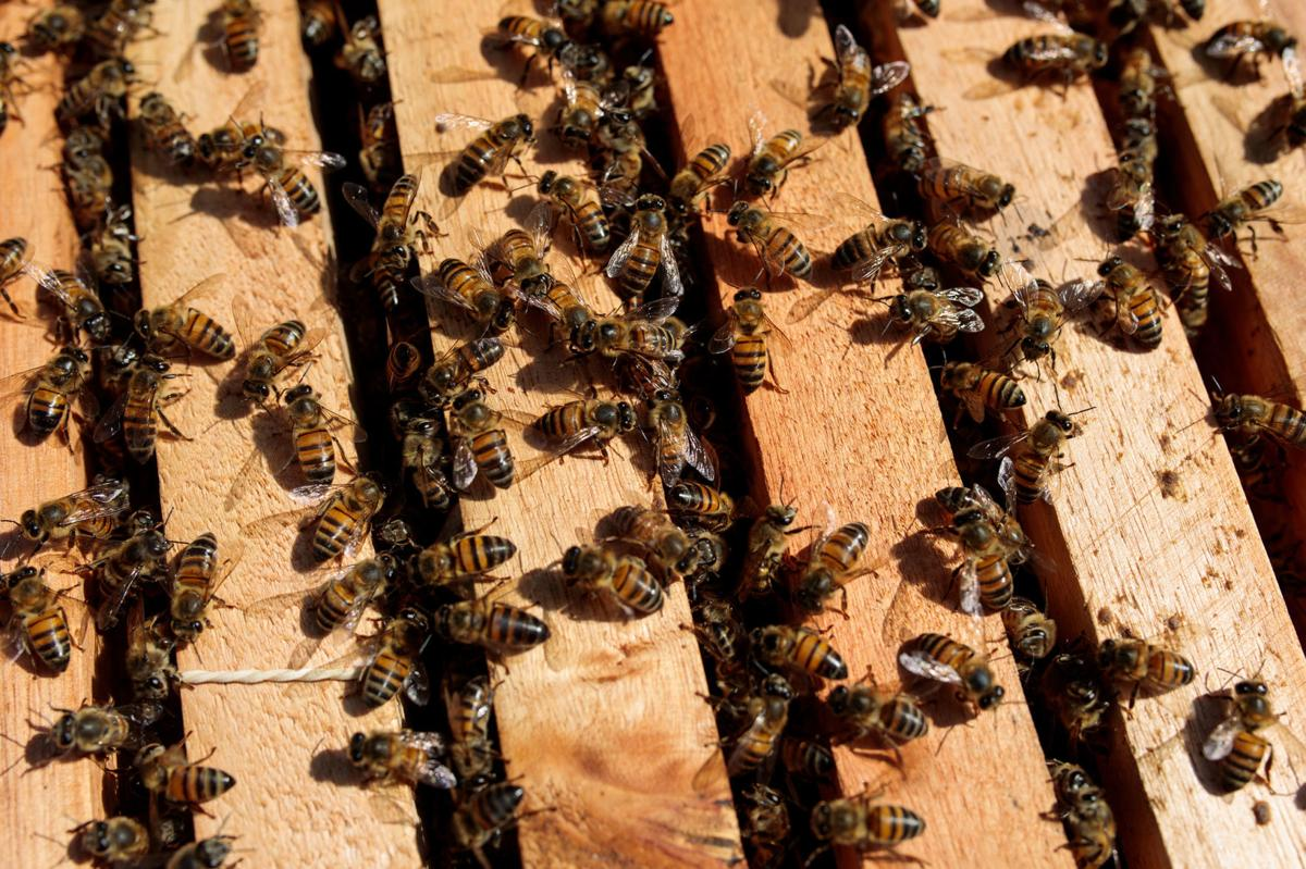 Bees are dropping dead in Brazil and sending a message to humans