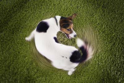 tail chasing 090418