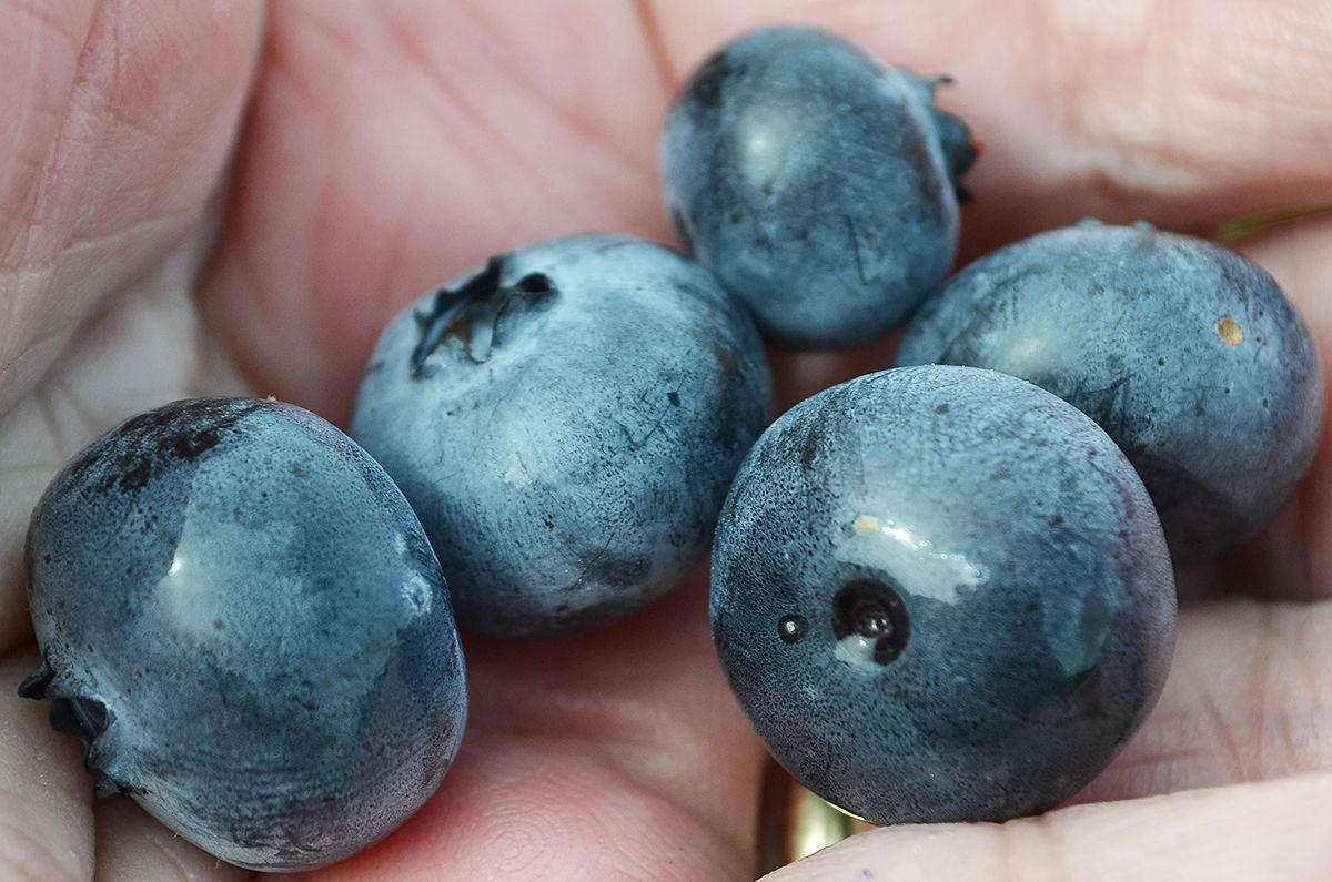 200731-RS-owens-berries