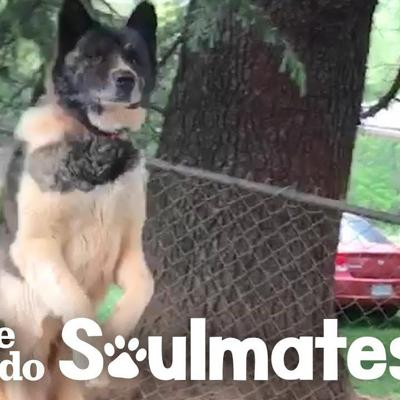 Woman Never Stops Trying To Rescue Sweet Dog Chained To A Tree | The Dodo Soulmates