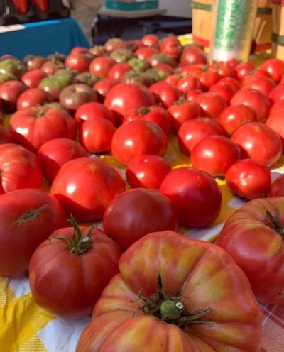 TomatoesPP1.jpg