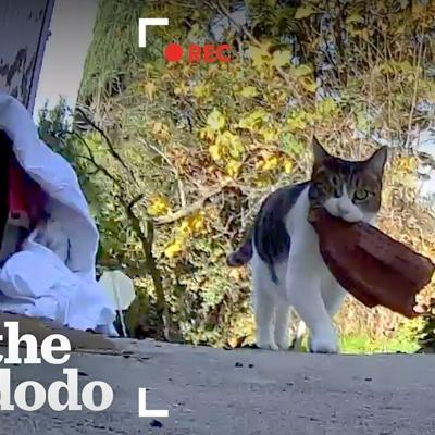 Cat Keeps Stealing Things From The Neighbors | The Dodo Cat Crazy