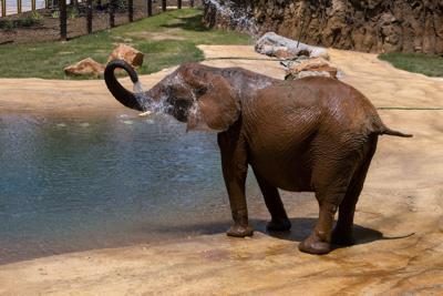 elephant_kelly_ZA_9473.jpg