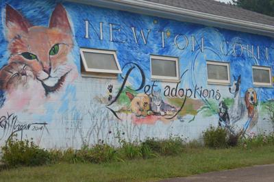Newton shelter