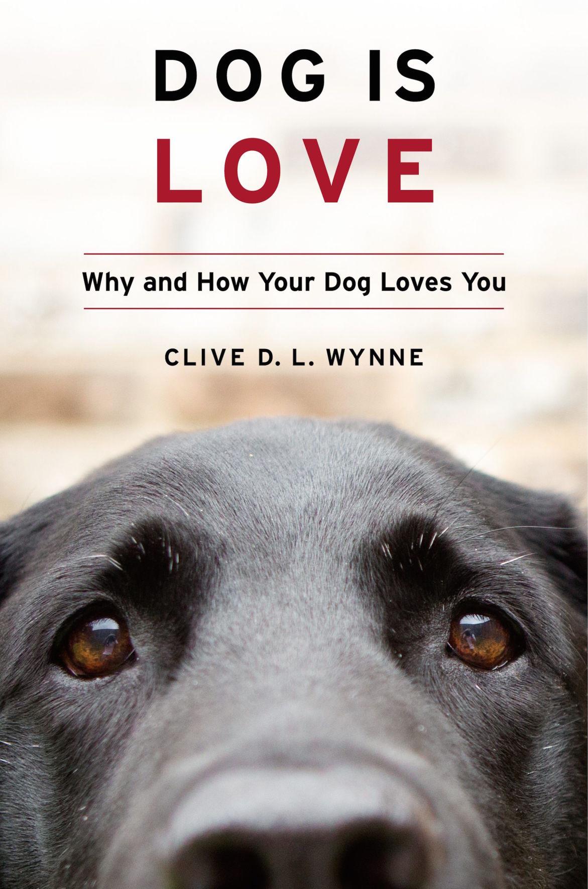 Dog is Love.jpg