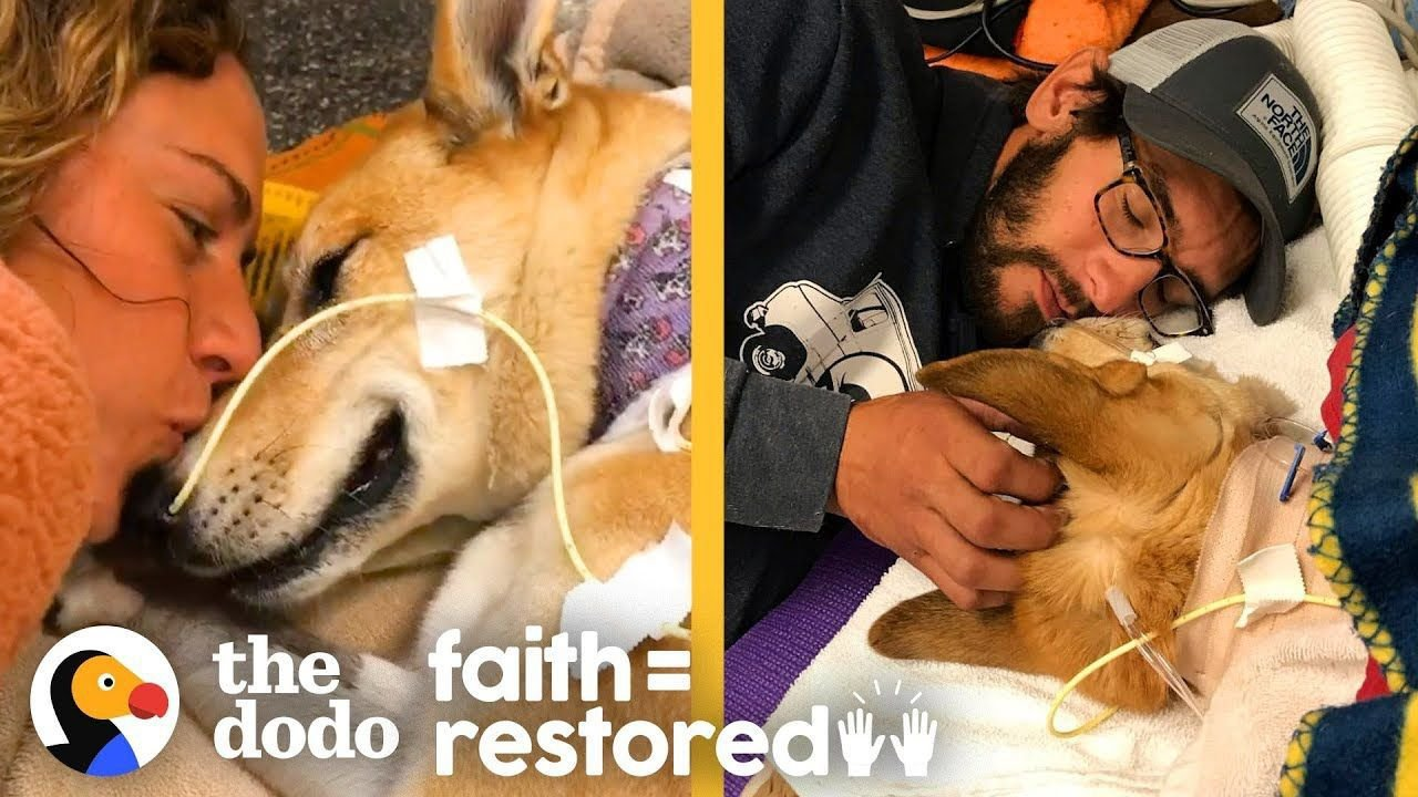 Dog Survives Car Hit and Proves Miracles Exist | The Dodo Faith = Restored