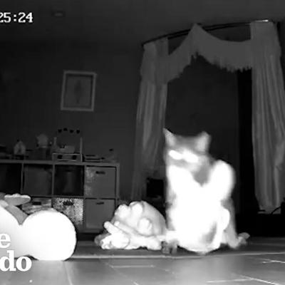 VIDEO: Hidden Camera Catches Cat Bringing Gifts To Her Family | The Dodo Cat Crazy
