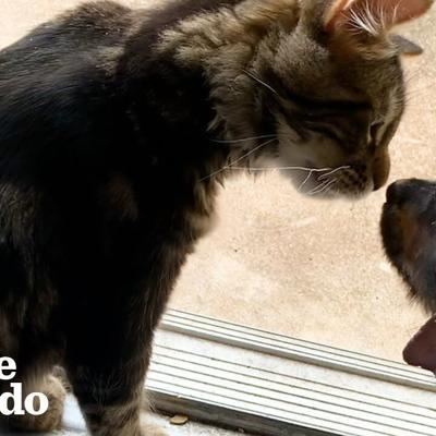 The Tiniest Puppy Grows Up Wrestling With His Cat Foster Brother | The Dodo Foster Diaries