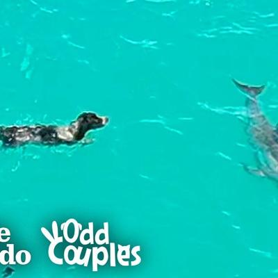 Dog And Wild Dolphin Play Whenever They See Each Other | The Dodo Odd Couples