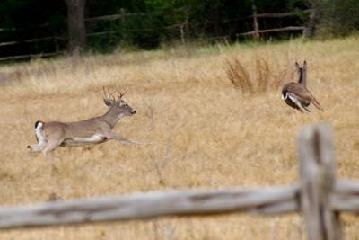 Deer rut maps available | Sports | rockdalenewtoncitizen.com Deer Rut Map on