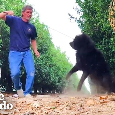 Stray Dog With A Secret Keeps Running From Rescuer | The Dodo Faith = Restored