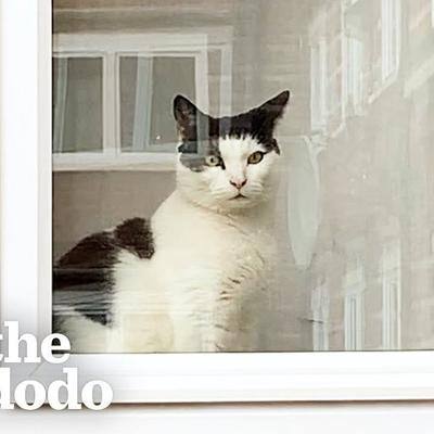 Cat Chronicles His Journey With Unrequited Love | The Dodo Cat Crazy