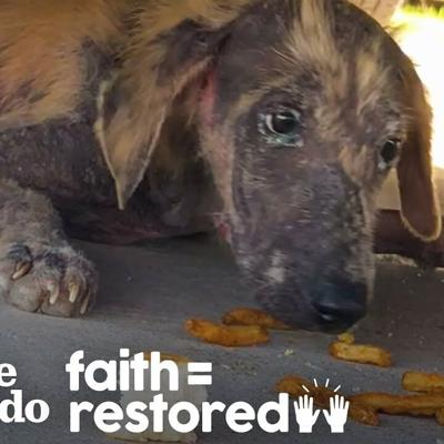 Abandoned Puppy Found Under Truck Fights So Hard To Get Better | The Dodo Faith = Restored