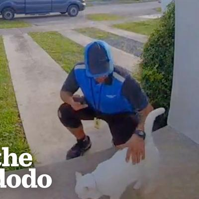 Cat Caught Greeting Delivery Drivers On Camera | The Dodo Cat Crazy