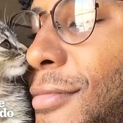 Kitten Goes For Walks On Dad's Shoulder | The Dodo Soulmates