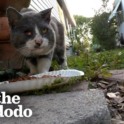 Stray Cat Goes From Street Puddles To Sweet Cuddles With His New Brother | The Dodo Cat Crazy