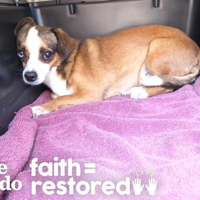 Dog Who Was Shaking For Months Finally Wags Her Tail   The Dodo Faith = Restored