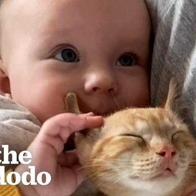 Baby Girl And Her Kitten Brother Are Completely Inseparable | The Dodo Soulmates