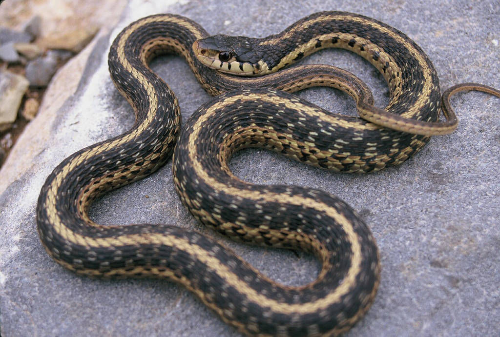 Questions about snakes? Georgia DNR has answers | Rockdale ...