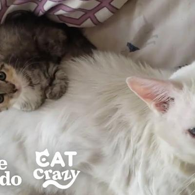 Abandoned Cat Was Antisocial Until A Tiny Kitten Forced Him To Play With Her | The Dodo Cat Crazy