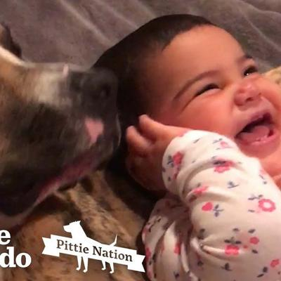 Little Girl Grows Up With Pit Bull In Sweetest Time Lapse | The Dodo Pittie Nation