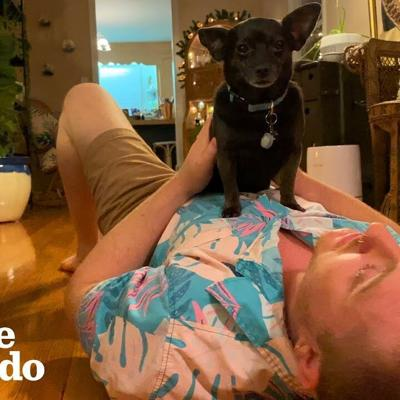 Tiny Rescue Dog Is More Empathetic Than Most People | The Dodo