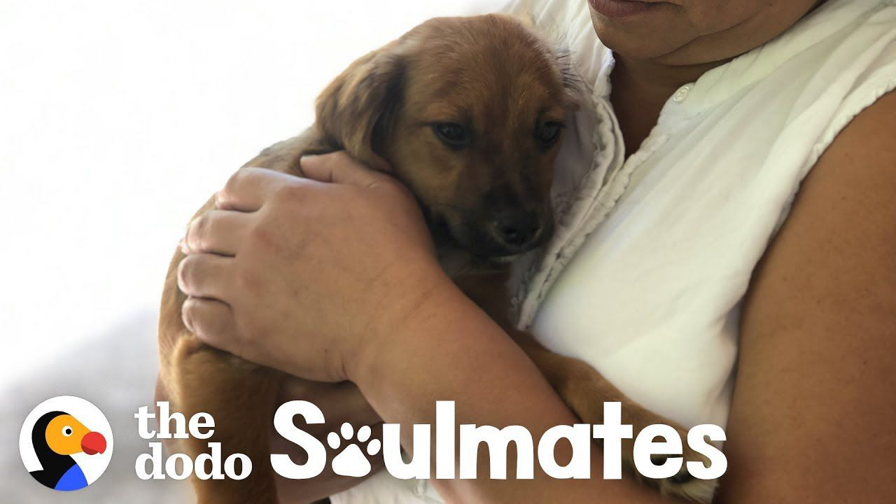 Couple Finds A Stray Puppy On Vacation | The Dodo Soulmates