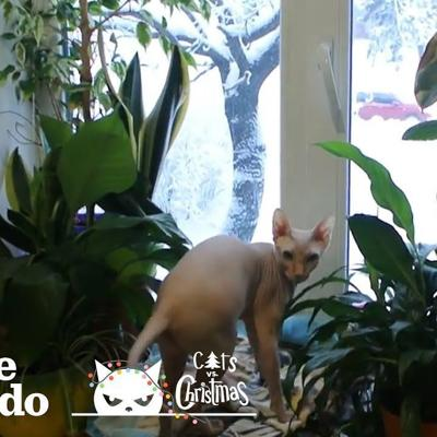 Hairless Cat Insists On Going Out In The Snow | The Dodo