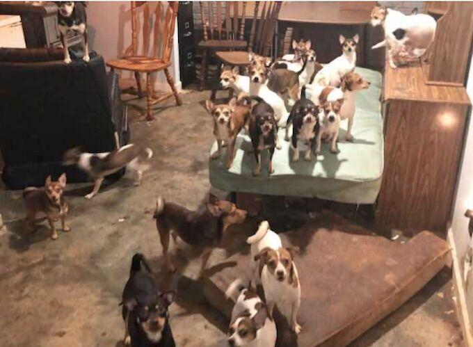 192 dogs rescued from home