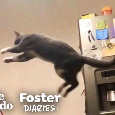 Woman Fosters A Shy, Scared Cat And ... 😍 | The Dodo Foster Diaries