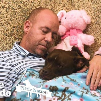 Guy Moves Into Animal Shelter Because He Loves This Pittie So Much | The Dodo Pittie Nation