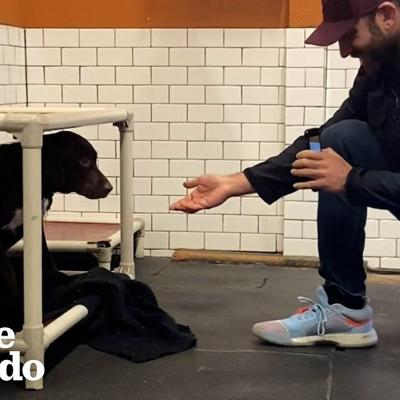 Shaking Shelter Dog Covers Her Foster Dad's Face With Kisses | The Dodo Foster Diaries