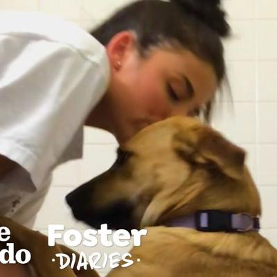 College Student Can't Say Goodbye To Her Foster Dog | The Dodo Foster Diaries