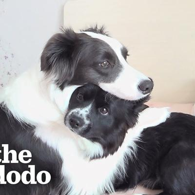 This Dog Won't Leave Her Little Brother's Side When He's Sick | The Dodo