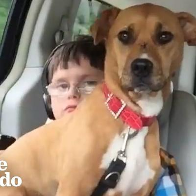 Rescue Pittie Helps Her Brother Start Talking | The Dodo Pittie Nation