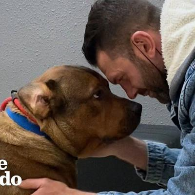 Guy Thought He Was Meeting A 'Very Aggressive Dog'... | The Dodo Foster Diaries