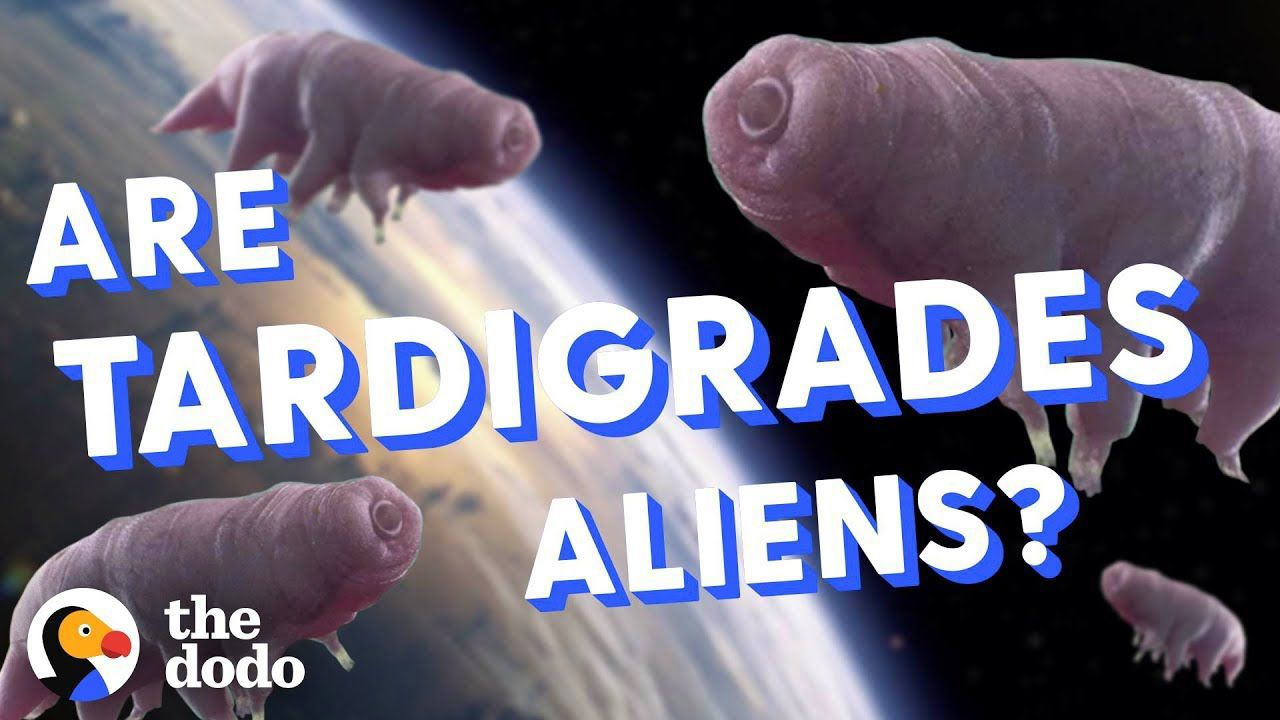 Are Tardigrades Aliens? | The Dodo