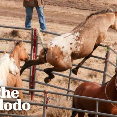 Wild Horse Immediately Recognizes His Girlfriend After Years Apart | The Dodo Faith = Restored