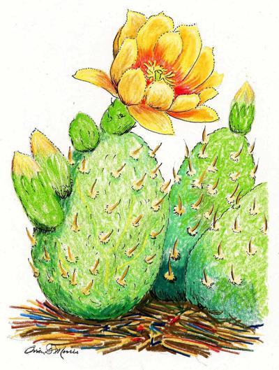 Prickly Pear (1).jpeg