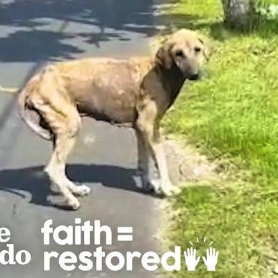 This Woman Tries To Rescue A Dog For An Entire Month   The Dodo Faith = Restored