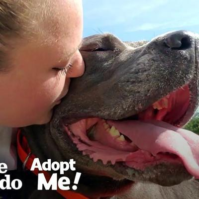85-Pound Cane Corso Worked SO Hard To Be A Good Girl | The Dodo Adopt Me!