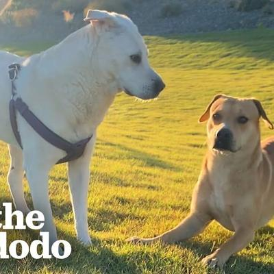 Stray Dog Wags His Tail For The First Time — When He Meets A Girl Dog | The Dodo Faith = Restored