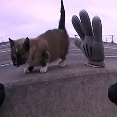 Kitten Stuck On Busy Highway Median | The Dodo