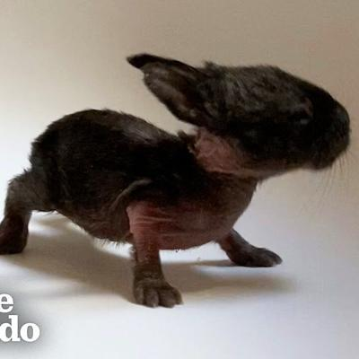 VIDEO: This Is The Tiniest Baby Bunny In The World | The Dodo Little But Fierce