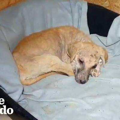 This Puppy Has An Amazing Transformation After Takis (And His Cats) Care For Her | The Dodo